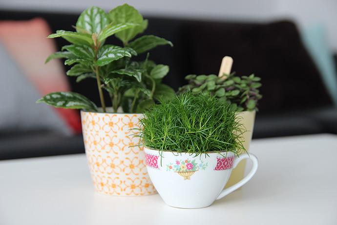 plantjes-in-kopjes (1)